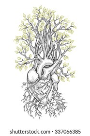 Human anatomical heart with veins like roots, from which grows a tree with leaves as a symbol of life and health. Dotwork style