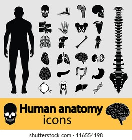 Human anatomy black & white icon set. Vector illustration.