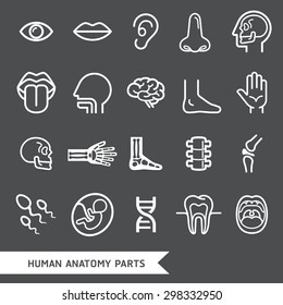 Human anatomy body parts detailed icons set. Vector illustration