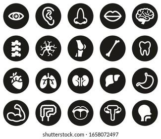 Human Anatomy Or Human Body Parts Icons White On Black Flat Design Circle Set Big