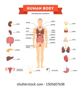 Human anatomy concept. Male body with set of internal organ. Intestine, heart, liver and stomach. Medicine and science concept. Isolated vector illustration in cartoon style