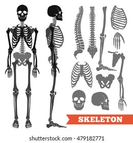 Human anatomy flat monochrome set with skeletons and single bones isolated on white background vector illustration