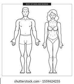 Human anatomy illustration is used for hospital theme, scientific and medical infographics. Vector outline illustration of man and woman body. Male and female silhouette of human body in underwear. Li