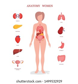 Human anatomy infographic elements with set of internal organs isolated on white background and placed in female body.