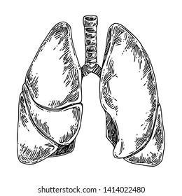 Human anatomy. Lungs. Sketch. Engraving style. Vector illustration.
