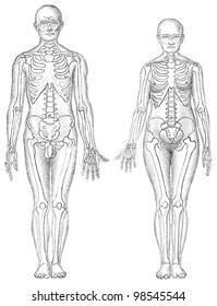 Human anatomy - man (left) and woman (right) / vintage illustrations from Die Frau als Hausarztin 1911