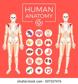 Human anatomy. Man and woman body, skeletal system, internal organs icons set. Liver organ, heart human organ icon, etc. Flat graphic design for web banners, website, infographics. Vector illustration