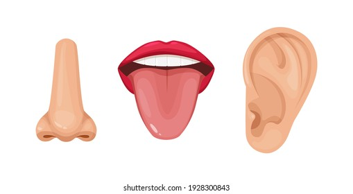 Human anatomy organs of smell, taste and hearing. Human organs. Nose smell, tongue of taste, ears. Perception of environment cartoon vector illustration