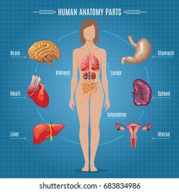 Image result for human body anatomy