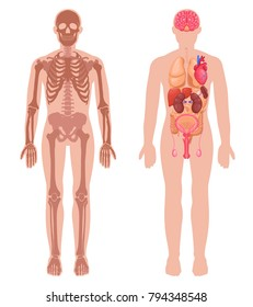 Human anatomy set with skeleton structure and internal organs in male body isolated vector illustration