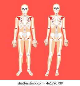 Human anatomy and skeletal system. Female and male bodies and skeletons. Modern concepts for web banners, infographics, websites, printed materials. Flat style design vector illustration