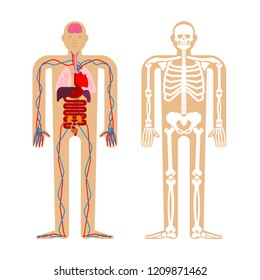 Human anatomy System. Skeleton and Internal organs. Systems of man body and organs. medical systems. vector illustration
