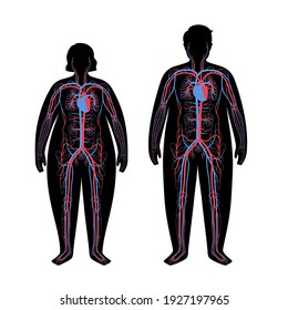 Human arterial and venous circulatory system in obese male and female body. Blood vessels diagram in overweight silhouettes. Infographic for medical anatomical poster isolated flat vector illustration