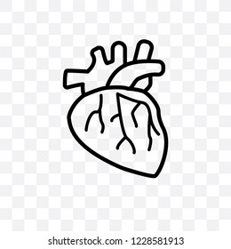 Human Artery vector linear icon isolated on transparent background, Human Artery transparency concept can be used for web and mobile