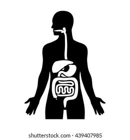Human biological digestive / digestion system flat vector icon for medical apps and websites