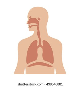 Human biological respiratory / respiration system flat vector color icon for medical apps and websites