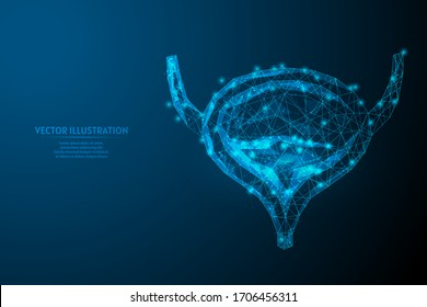 Human bladder close up. Organ anatomy. Excretory system. Kidney disease, cancer, cystitis, stones. Innovative medicine and technology. 3d low poly wireframe isolated vector illustration.