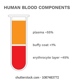 Human blood components. Fractioned blood in test tube. Vector.