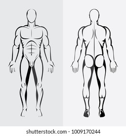 Human body anatomy. Male body front and back view. Hand drawn vector illustrations set. Flat design.