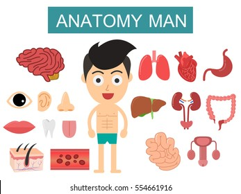 Human Body Anatomy man on white background