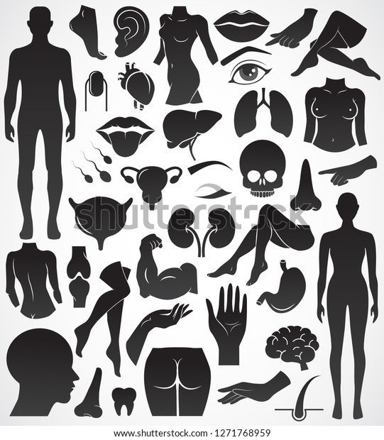 human body anatomy vector icon collection stock vector royalty free 1271768959 shutterstock