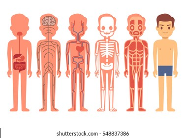 Human body anatomy vector illustration. Male skeleton, muscular, circulatory, nervous and digestive systems.