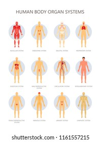 Human body biological systems vector infographic
