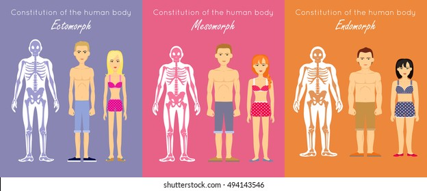 Human body constitution vector concept. Flat design. Anthropological anatomy scheme. Skeletons with muscle silhouettes and woman and man characters. Ectomorph, mesomorph, endomorph people somatotypes