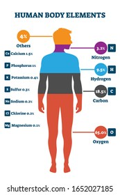 Human body elements, vector illustration infographic. Proportional percentage for nitrogen, hydrogen, carbon, oxygen and others. Healthy life chemical balance and well being on a biological level.