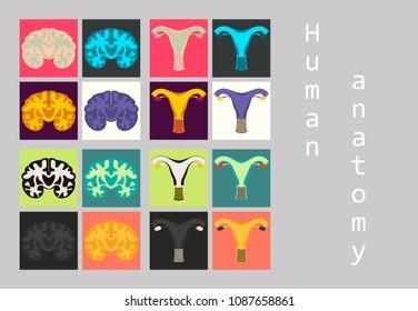 Human body internal organs medical vector flat isolated anatomy icons set