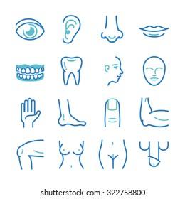 Human body - medical icons set