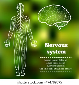 Human Body Neurology Anatomical Conception Vector Illustration.Nervous System,Brain,Cerebellum and anatomical body silhouette on abstract green blur pattern.Cerebral Anatomical Nervous System Tutorial