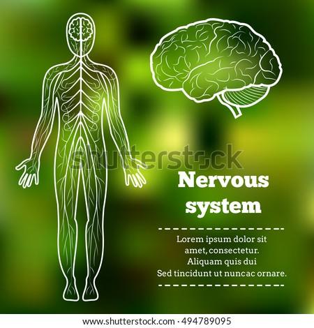 Human Body Neurology Anatomical Conception Vector Stock Vector