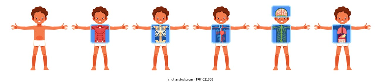 Human body organ systems educational anatomy physiology for kids. African American boy with anatomy skeleton, nervous, circulatory, and digestive systems. Poster cartoon vector illustration.
