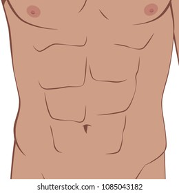 Human body part: Abs