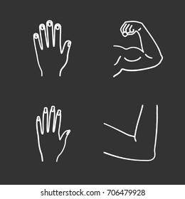 Human body parts chalk icons set. Male and female hands, muscular bicep, elbow joint. Isolated vector chalkboard illustrations