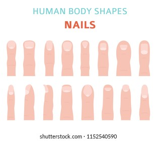 Human body shapes. Hand finger nail types set. Vector illustration