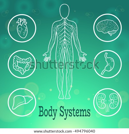Human Body Systems Anatomical Conception Vector Stock Vector