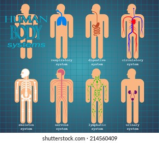 human body systems/ color pictogram/ vector illustration