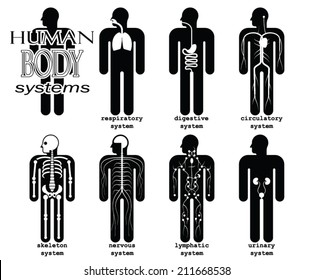 human body systems/ pictogram/ vector illustration set