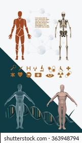 Human body templates, skeleton, x ray view
