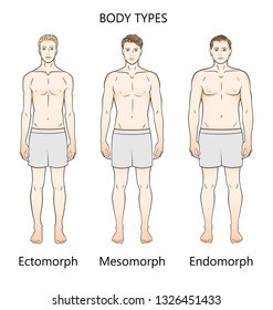 Human body types. Three figures. Forms: ectomorph, mesomorph and endomorph.