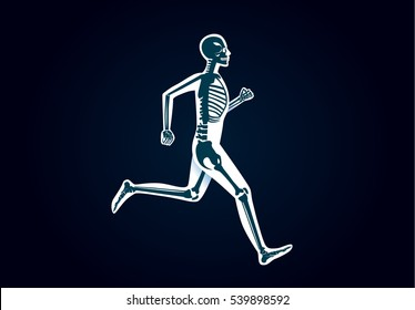 Human Bone Anatomy while run. Illustration about human physical and sport.