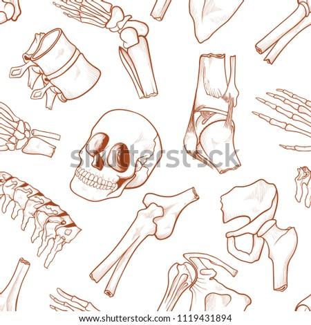 Human Bone Background Parts Human Skeletal Stock Vector (Royalty ...
