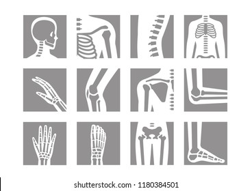 human bone and joint icon set
