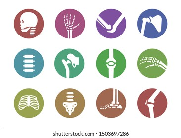 human bone and joint set, colorful flat design in circle frame