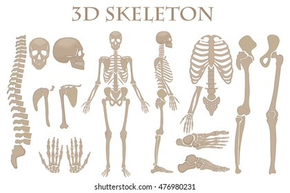 Human bones 3d realistic vector skeleton silhouette collection set. High detailed helloween illustration