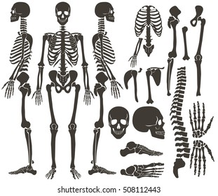 Human bones skeleton dark black silhouette collection. High detailed Vector Set of bones illustration