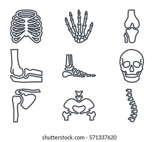 human bones skeleton line icon