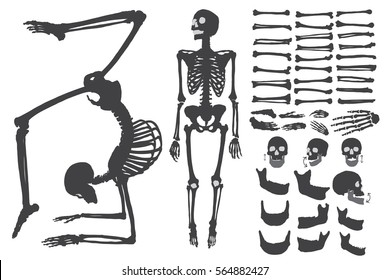 Human bones skeleton silhouette collection set. Character creation set with moving arms, legs, jaw and fingers on wrist Vector illustration.